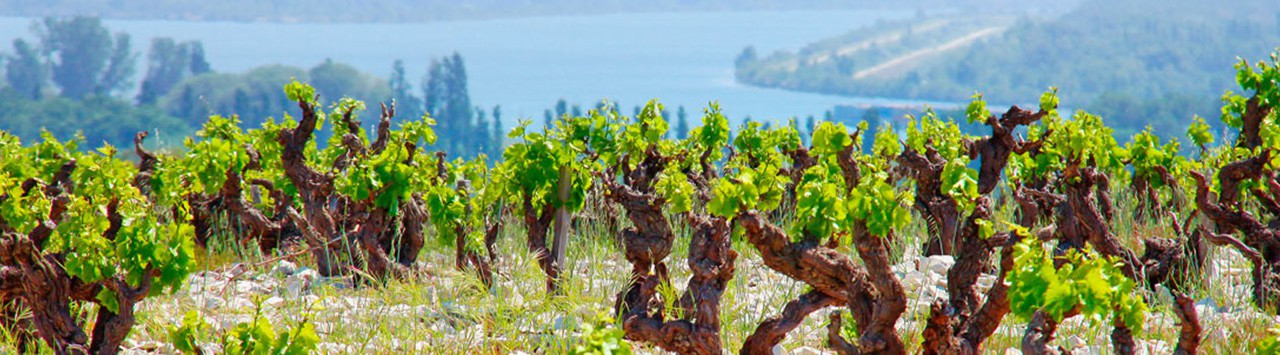 RHONE VALLEY SOUTH
