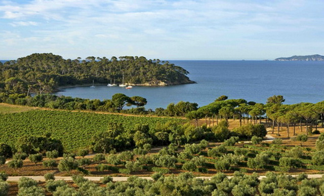 All our wines from Provence and Corsica